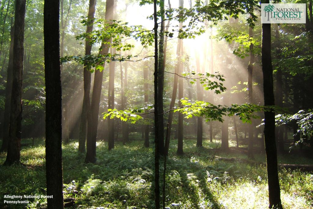 Desktop Backgrounds National Forest Foundation