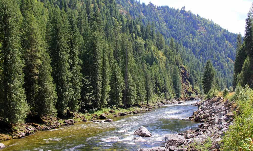 Create a Fundraiser Today to Plant Trees - National Forest