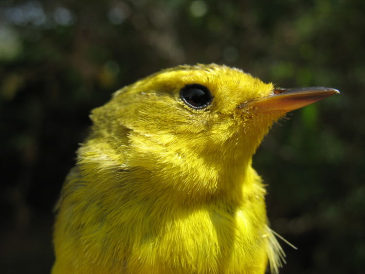 Birding with Kids - National Forest Foundation