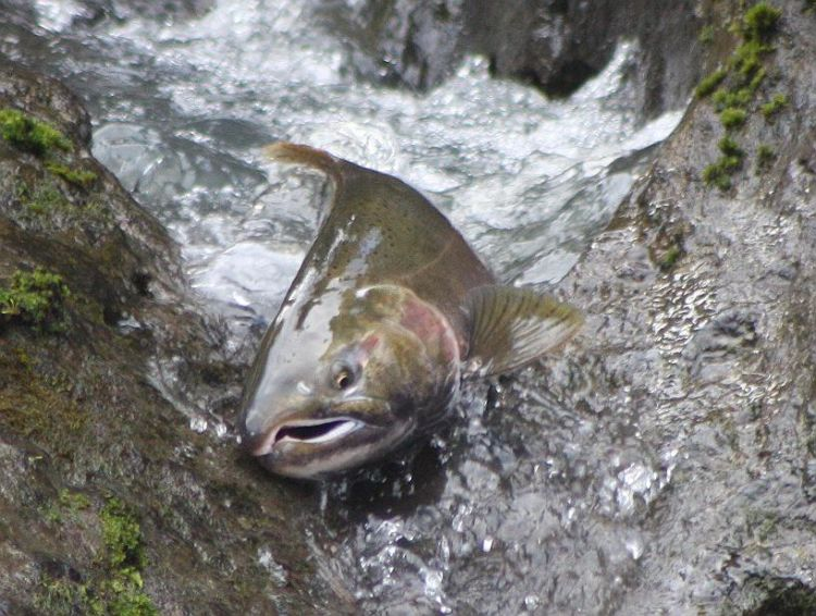 Nff grant builds capacity in rural oregon for community for Hood river fishing