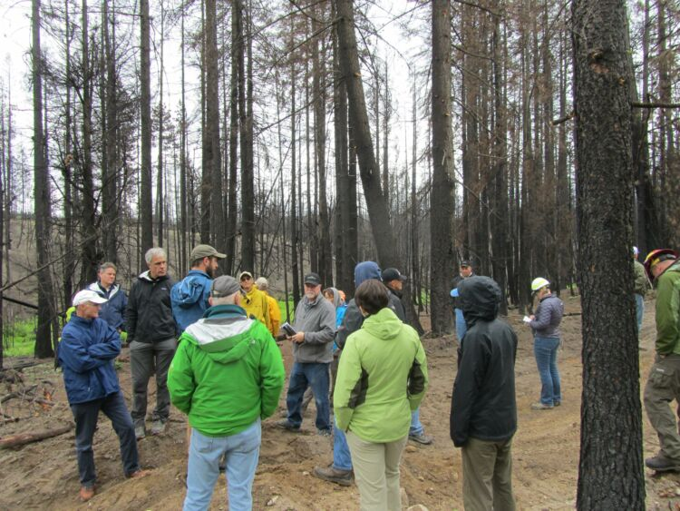 Eight Important Facts You Should Know About Post-Fire Restoration