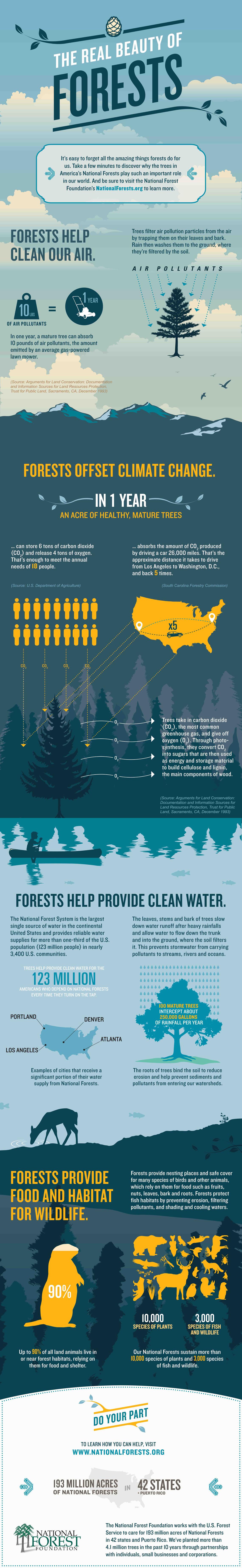資訊圖像案例_National Forest Foundation_The Real Beauty of Forests