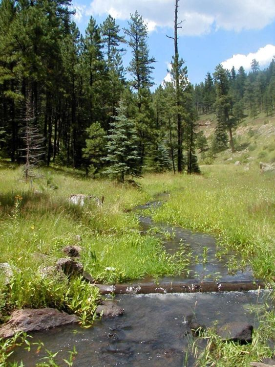 Apache-Sitgreaves National Forest - National Forest Foundation