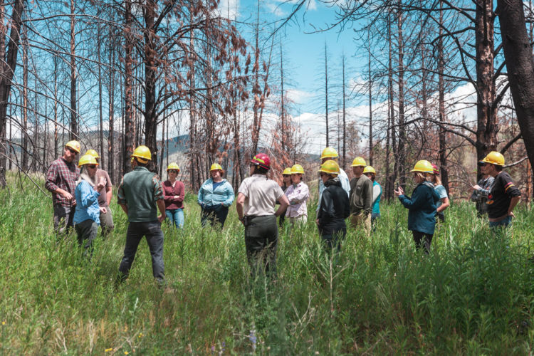In Our Own Words: the Importance of Reforestation
