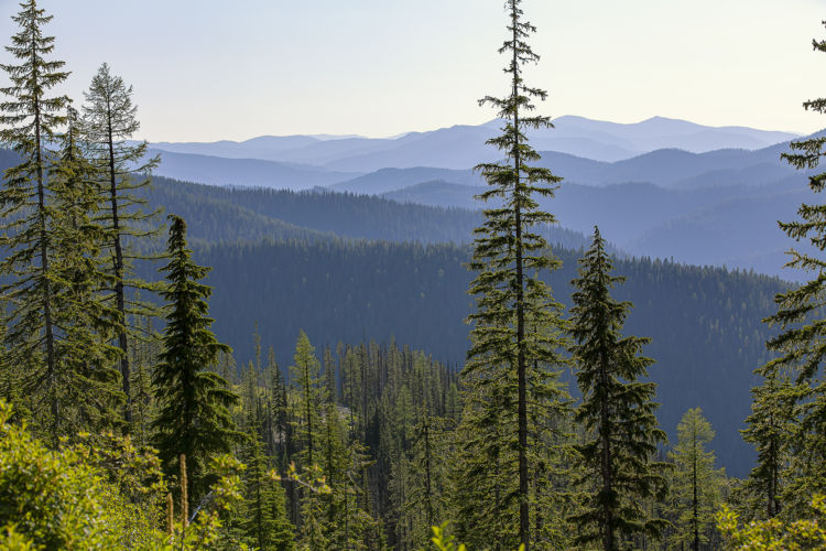 The Other (Surprising) Way Planting Trees Stores Carbon