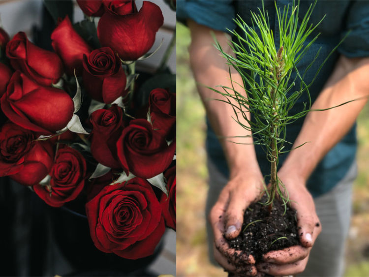 Image result for How To Take Care Of Flowers You Love?